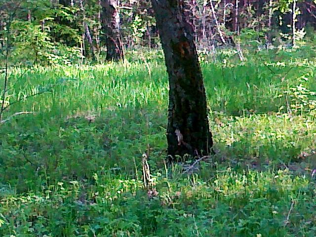 Бурундук на дереве. На прогулке
