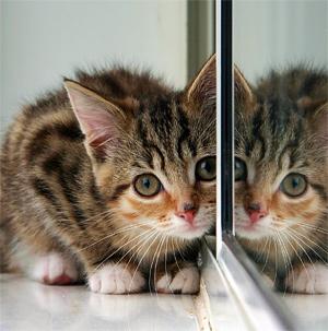 Что такое зеркало?