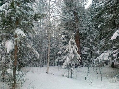 Снежная весна в лесу