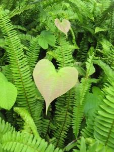 Природа Любви. Что значит любовь?