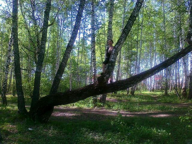 Стоя на дереве. Прогулка