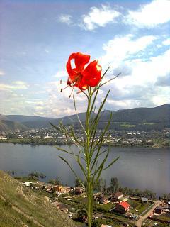 Красный цветок. Река. Небо. Город