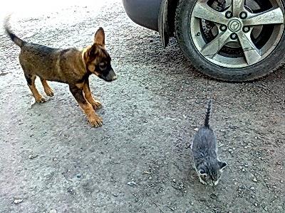 Щенок и котенок. Прогулка