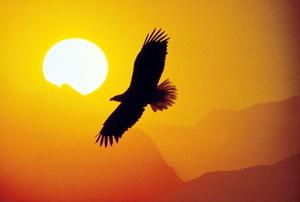 Свобода человека. Философия свободы. Тема свободы.