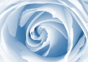 Значимость. Важность. Жалость. Роза. Чувства.